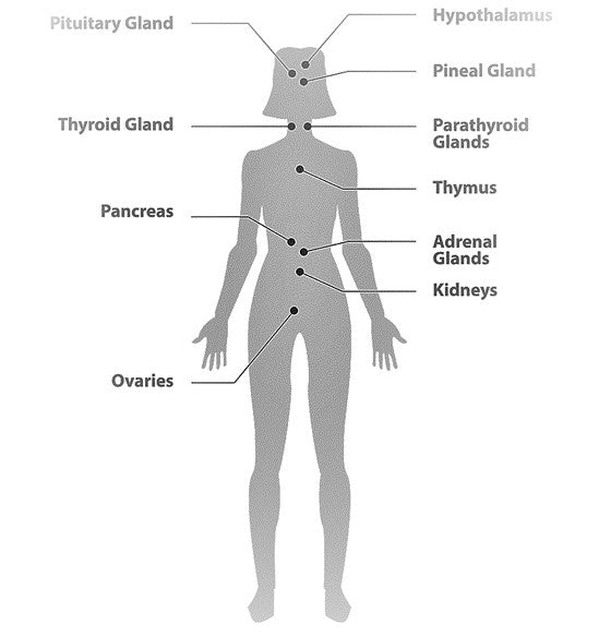 The Endocannabinoid System - Human Body