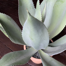 Load image into Gallery viewer, Aloe Vera Plant Faux Plant Henderson's