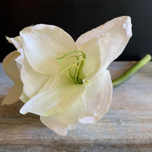 Load image into Gallery viewer, Amaryllis Stem Faux Stem Henderson's