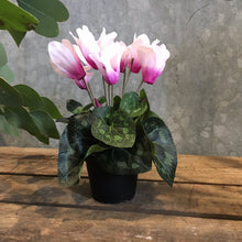 Load image into Gallery viewer, Cyclamen Plant Faux Plant Henderson's pink