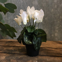 Load image into Gallery viewer, Cyclamen Plant Faux Plant Henderson's white