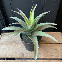 Load image into Gallery viewer, Faux Aloe plant Faux Plant Henderson's