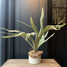 Load image into Gallery viewer, Staghorn Fern in Pot Faux Plant Henderson's