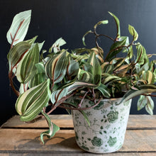 Load image into Gallery viewer, Tradescantia in Pot Faux Plant Henderson's