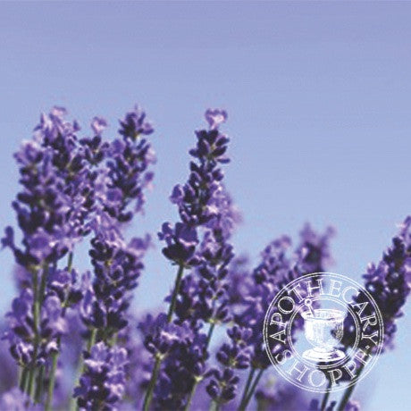 NZ Lavender Essential Oil