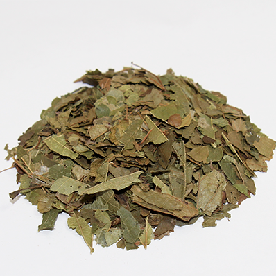 Witch Hazel Leaf Organic