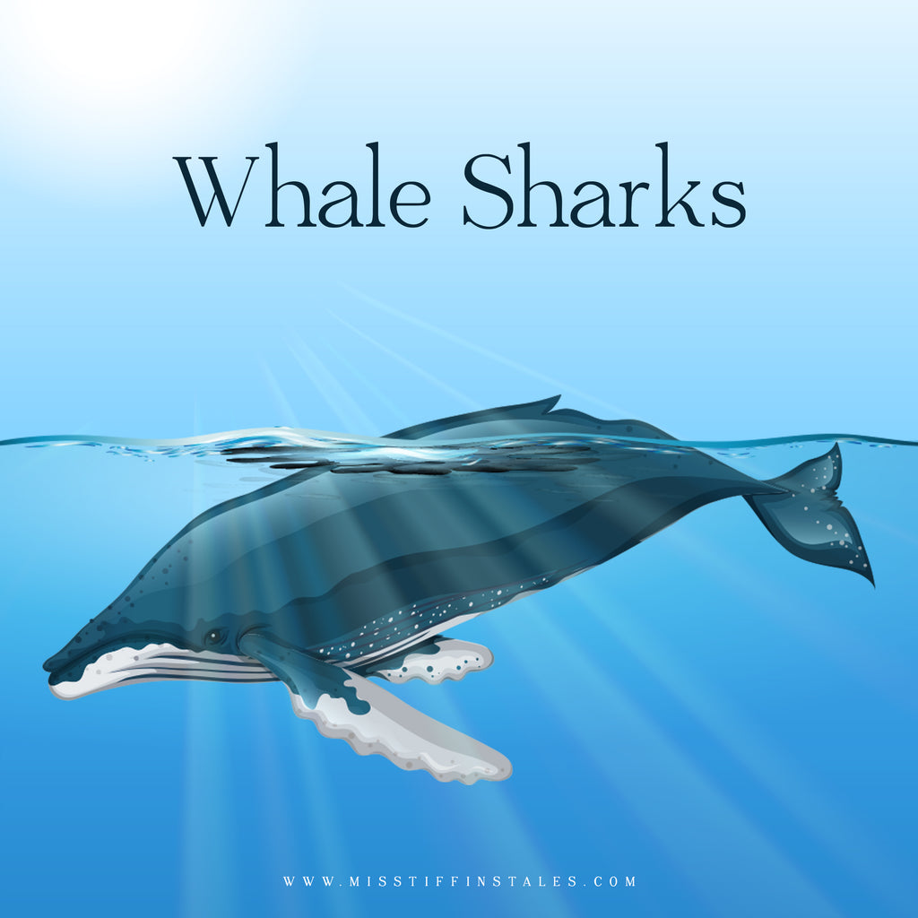 Whale Sharks, Year 2, Information Texts