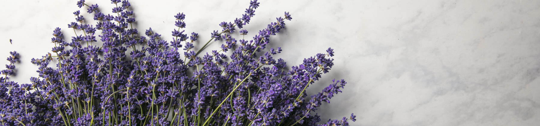 Fresh Lavender Bunches & Plants