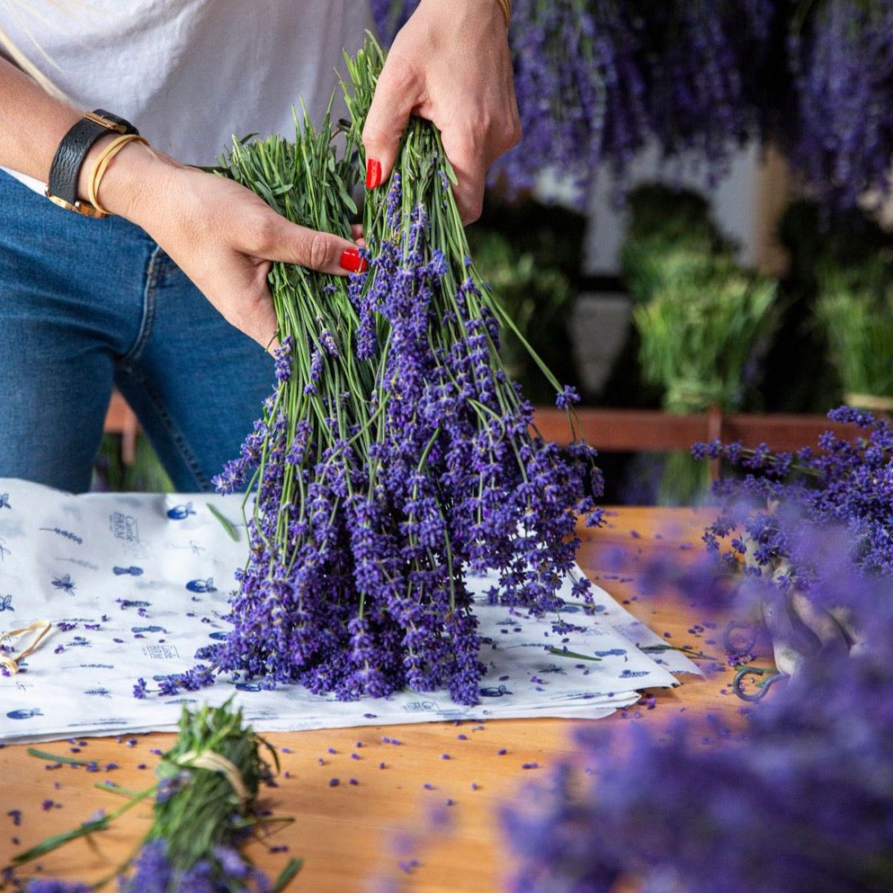 FRESH LAVENDER BUNCHES