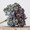 CASTLE FARM DRIED PURPLE/BLUE HYDRANGEA