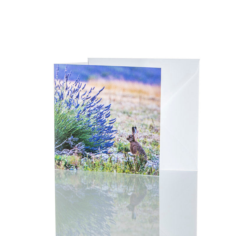 GREETINGS CARD – 'HARE IN KENTISH LAVENDER AT CASTLE FARM'