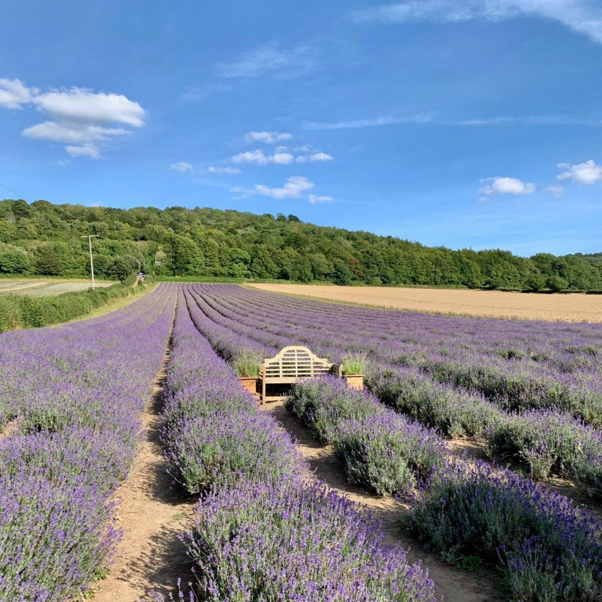 LAVENDER FIELD WALKS - SOLD OUT FOR 2020