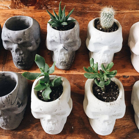Golden Gems - Skull Planters - White