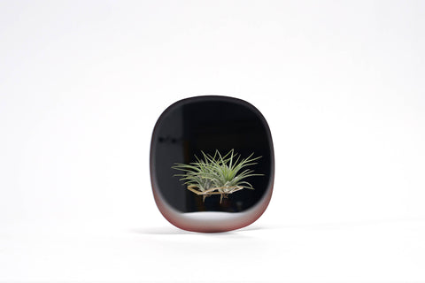 Mirror Planter for Air Plants