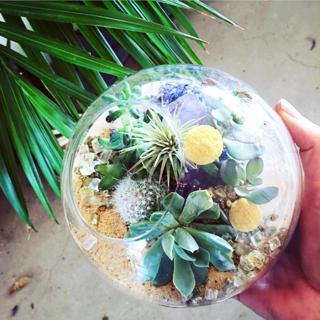 Medium Clear Terrarium Rental