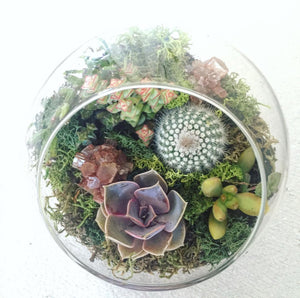Small globe terrarium rental