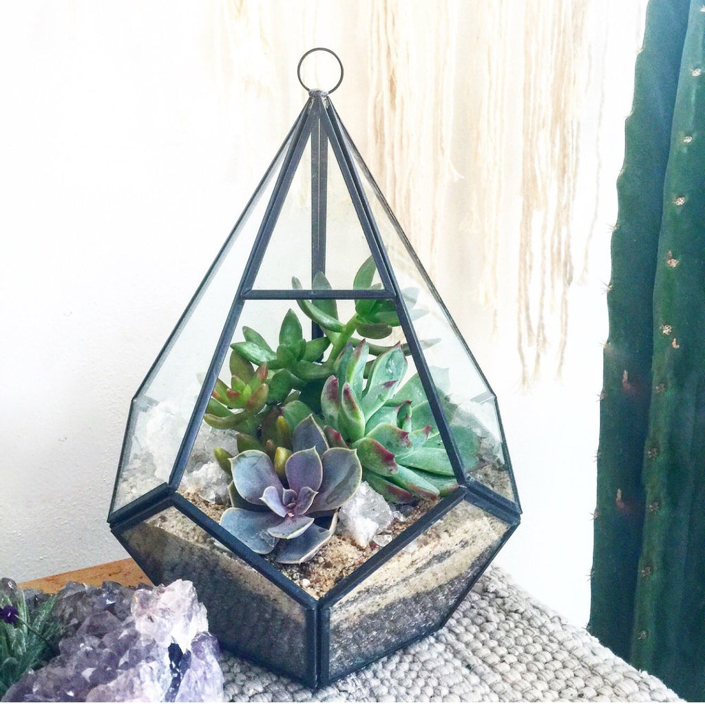 Medium Geo Terrarium Rental