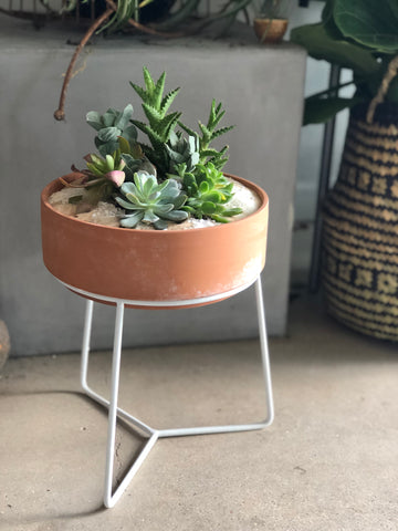 Norburt Succulent Stand (arranged)