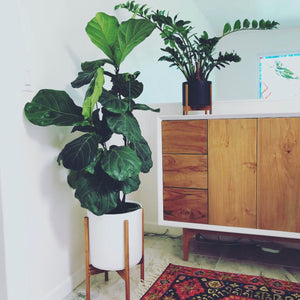 The Ten Plant Stand Rental