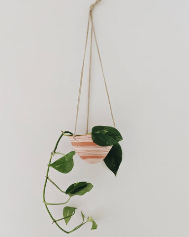 Hanging Terracotta Planter + Pothos