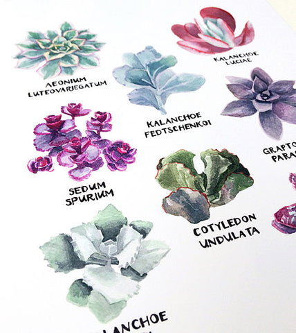 Mini Succulent Species Poster