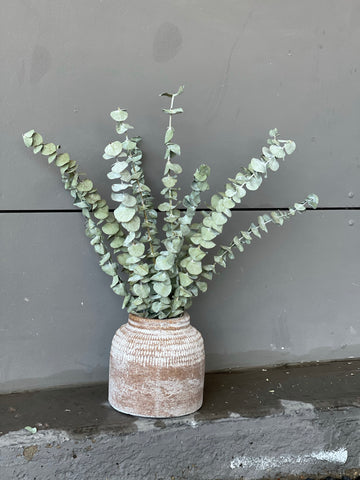 Eucalyptus in Bria Planter