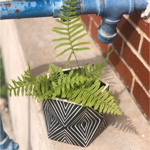 Caterpillar Fern in Dazed Planter
