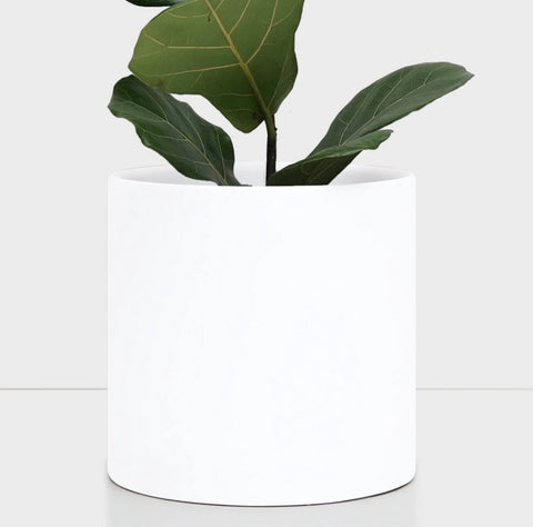 "10"" White Ceramic Planter"