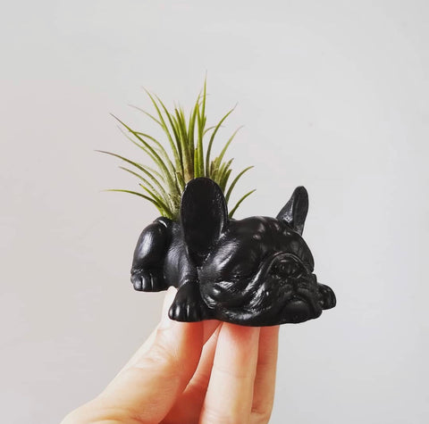 Black Bull Dog Planter