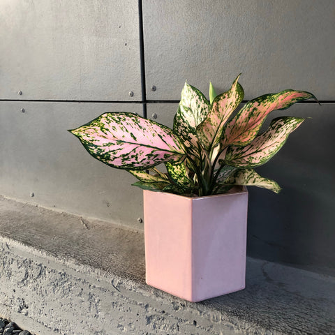 Valentine Ag in Madre Planter