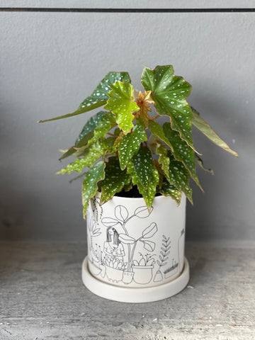 Lois Burke in Plant Love Planter