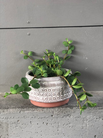 Coin Peperomia in Terra-cotta Shapes Planter