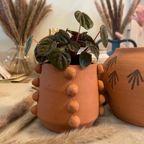 Peperomia in Beaded Terra-Cotta Planter