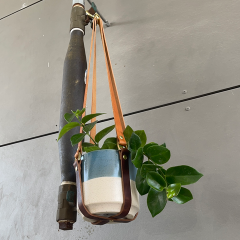 Lipstick Plant in Leather Plant Hanger