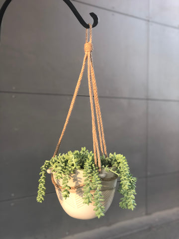 Hanging Donkey Tail