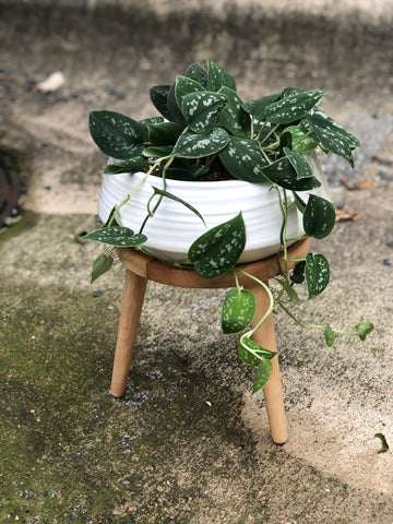 Silver Pothos Planter Stand