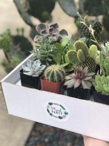 Assortment of 5 Succulents + Cacti