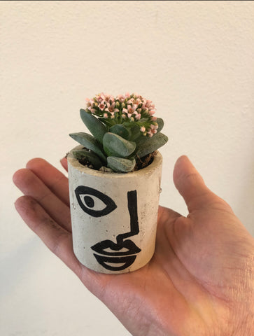 Face pot with Succulent
