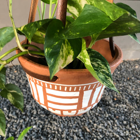 Hanging Pothos (varietal) in Nativo Planter