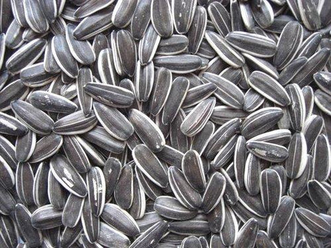 Grey Sunflower Seed 15kg