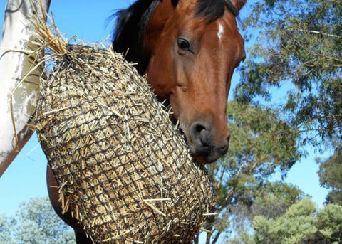 Slow Feed Hay Net 4cm Sml