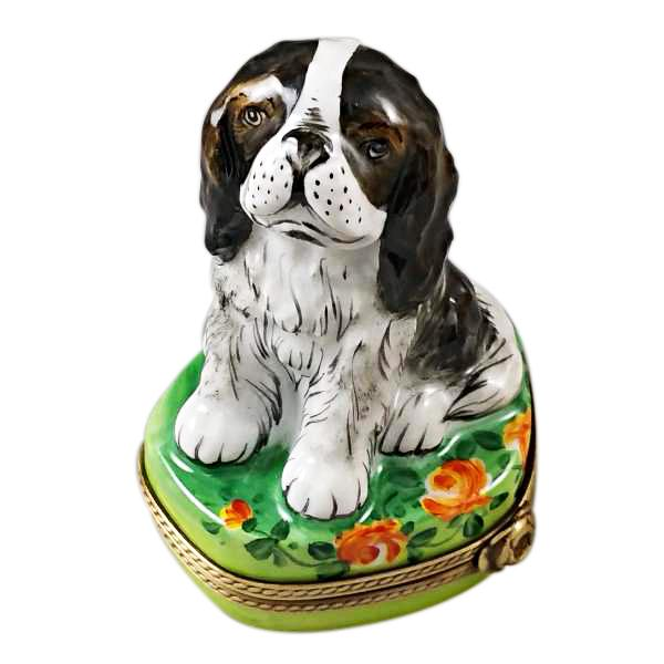 TRI COLOR KING CHARLES SPANIEL