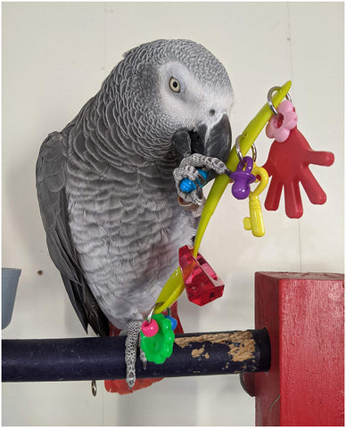 African Grey Toys | Lickety Split Handheld Foot Toys for Parrots