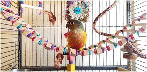 Bridge ladder for small and intermediate birds made by Birdy Boredom Busters