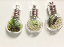 Load image into Gallery viewer, Terrarium Pendant