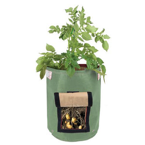 Growing potatoes is easy with the Bloombagz Potato Planter. Use indoor or outside gardens for lush plants all year round. Perfect landscape gardening for small spaces. Can also be used as a storage solution. Environmentally friendly made out of 100% recycled materials. Promotes growth of healthy potatoes. Velcro side-window flap allows you to conveniently harvest your spuds beneath the soil one at a time.