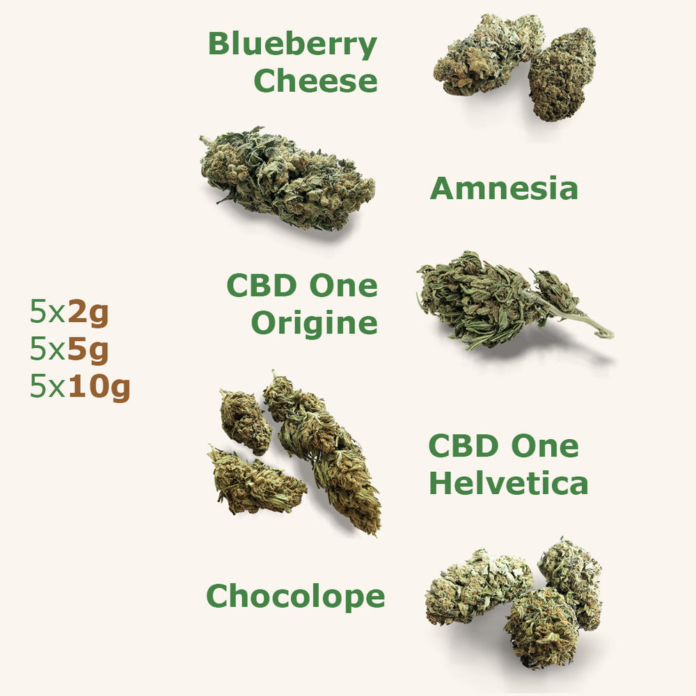 Full Pack (x5) : CBD One Origine, BlueBerry, Amnesia, Chocolope, CBDOne Helvetica - the-cbd-farmer