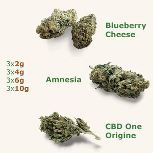 Pack The Green MasterClass : CBD One Origine x Blueberry Cheese x Amnesia - the-cbd-farmer