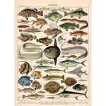 poster vintage poissons