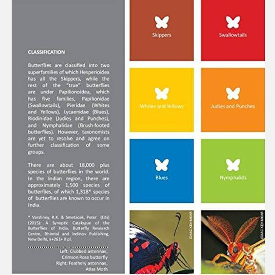 Butterflies of India - Books - indic inspirations